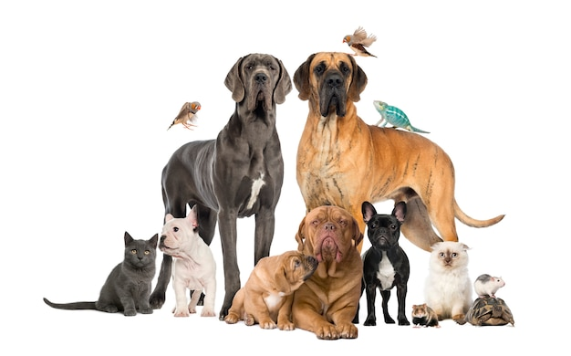 Gruppe von haustieren - hund, katze, vogel, reptil, kaninchen, isoliert auf whi