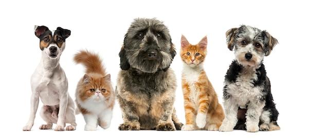 Gruppe von hunden und katzen vor einer weißen wand