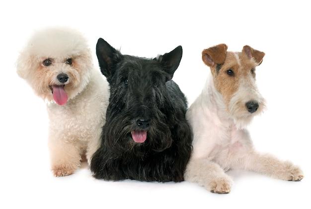 Gruppe von hunden