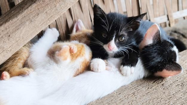 Gruppe von kätzchen, die im landhaus spielen. niedliche kleine katzen mehrfarbig liegend auf holzboden