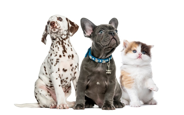 Gruppe von kätzchen und welpen, die lokal auf weiß sitzen
