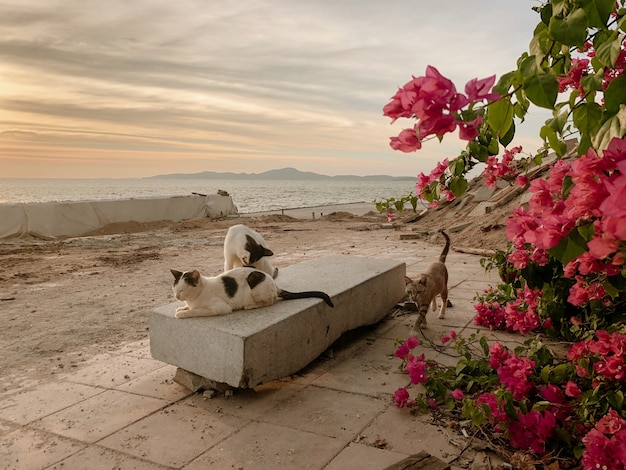Gruppe von katzen, die auf einer bank durch das meer während des sonnenuntergangs entspannen
