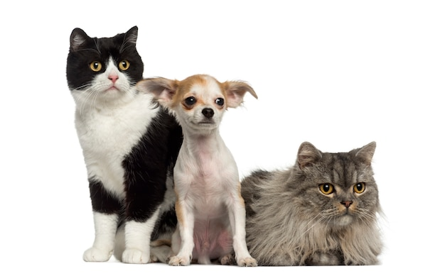 Gruppe von katzen und hunden, die sitzen und liegen