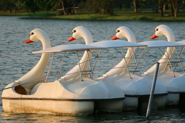 Gruppe von leeren schwanenpedalbooten, die auf dem see in einem park schwimmen