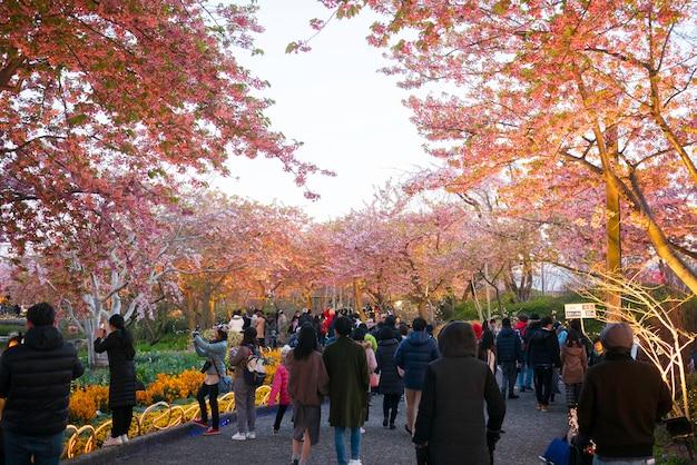 Gruppe von personen, die foto macht und zum kirschblütenfeld in nabana kein sato, nagoya, japan reist.