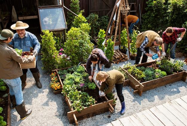 Gruppe von personen, die gemüse im gewächshaus pflanzt