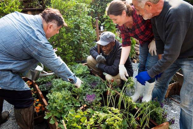 Gruppe von personen, die gemüse pflanzt