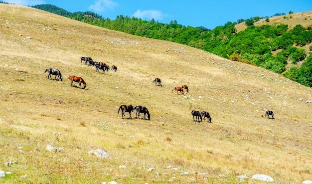 Gruppe von pferden, die zusammen gras auf einem feld fressen pferde auf einer wiese