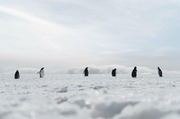 Gruppe von pinguinen, die am gefrorenen strand spazieren gehen