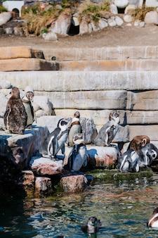 Gruppe von pinguinen im zoo park