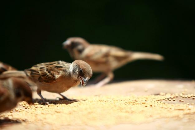 Gruppe von spatzen, die samenvogelfutter essen, schließen