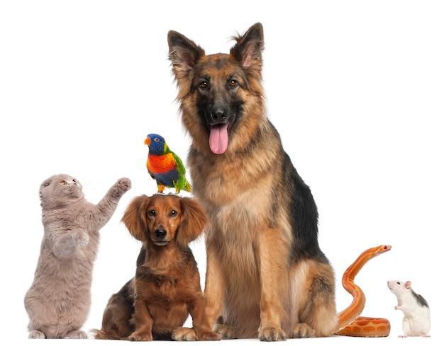 Gruppe von tieren isoliert