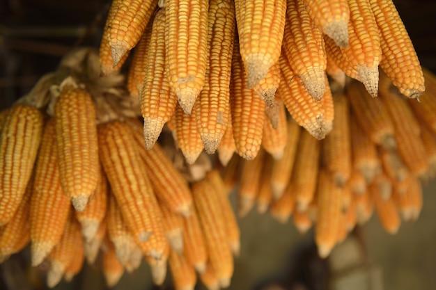 Gruppe von trockenem mais
