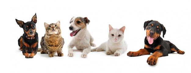 Gruppe von welpen und katzen auf einem weißen hintergrund