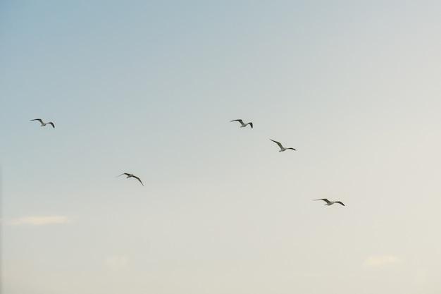 Gruppe weiße seemöwen, die gegen azl himmel fliegen