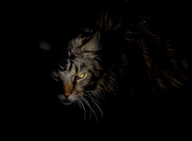 Gruselige horrorkatze wütend böse katzenartige dämon gruseliges tier über schwarzem hintergrund