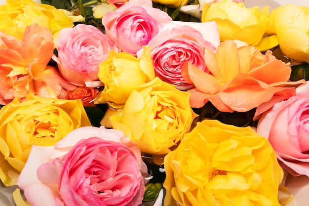 Grußkarte mit englischen rosen in pastellfarben mit tropfen auf blütenblättern nach regen im wasser