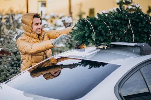 Gut aussehender mann, der weihnachtsbaum am auto sichert