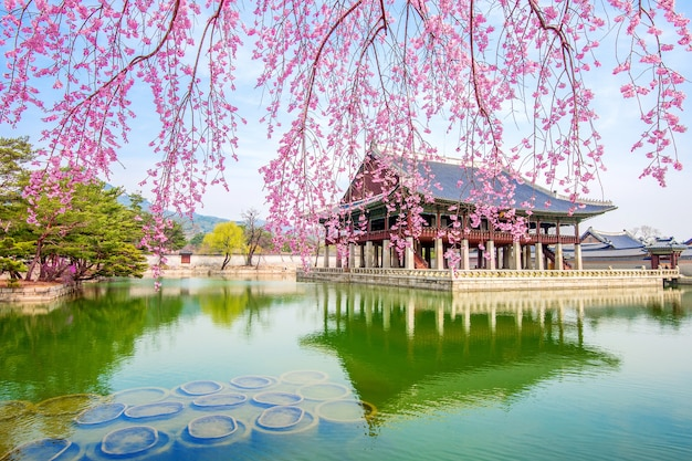 Gyeongbokgung-palast mit kirschblüte im frühjahr, südkorea.