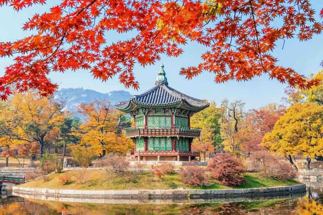 Gyeongbukgung und ahornbaum im herbst in korea.