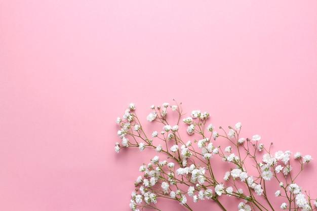 Gypsophila blüht auf rosa hintergrund