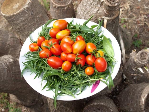 Habe gerade tomaten gepflückt