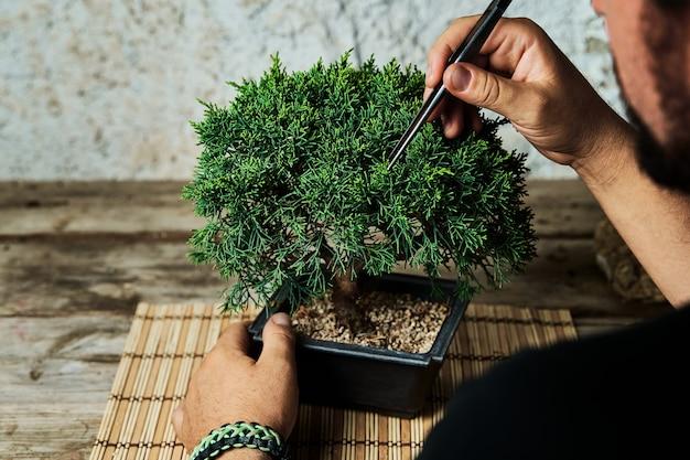Hände beschneiden einen bonsai-baum