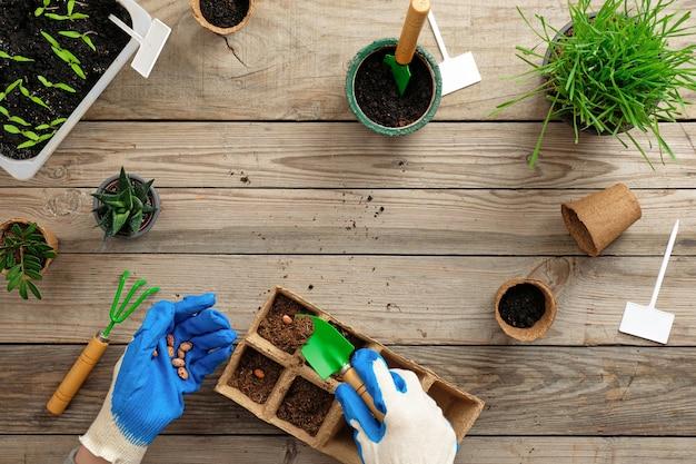 Hände des gärtners setzt samen in torfbehälter mit boden ein. gartenarbeit oder pflanzenkonzept.