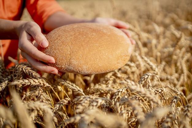 Hände des landwirts, der frisch gebackenes kleiebrot aus rohem gesundem mehl mit goldenen weizenähren im hintergrund hält. agronom, der einen laib brot auf dem ländlichen gebiet hält. reiche ernte, nahrung, landwirtschaftsthema.