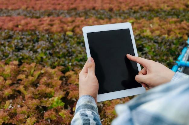 Hände des landwirts des jungen mannes, der mobilen tablet-computer mit organischem wasserkulturfrischgemüse verwendet, produzieren im gewächshausgarten-kindertagesstättenbauernhof