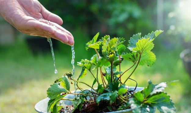 Hände des landwirts wachsenden und nährenden baum, der auf fruchtbarem boden wächst