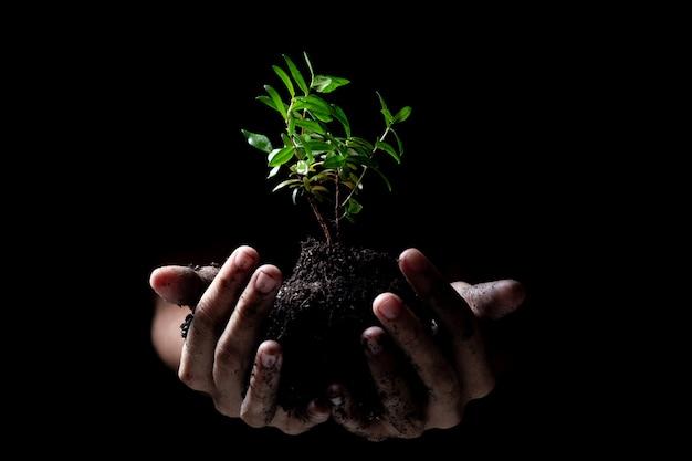 Hände, die ein junges grünpflanzewachsen halten