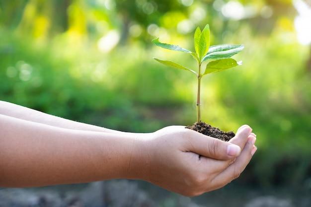 Hände, die eine junge grünpflanze halten. retten sie das welt- und weltumwelttag-konzept.