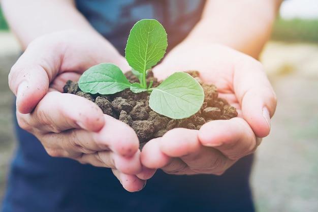 Hände, die eine kleine grünpflanze wachsen im braunen gesunden boden mit warmem licht halten