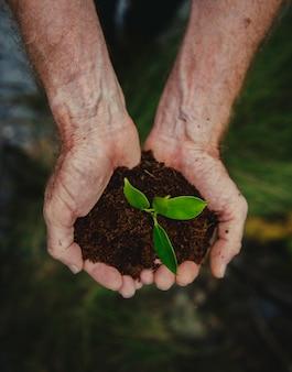 Hände, die einen stapel des erdbodens mit einer wachsenden anlage halten