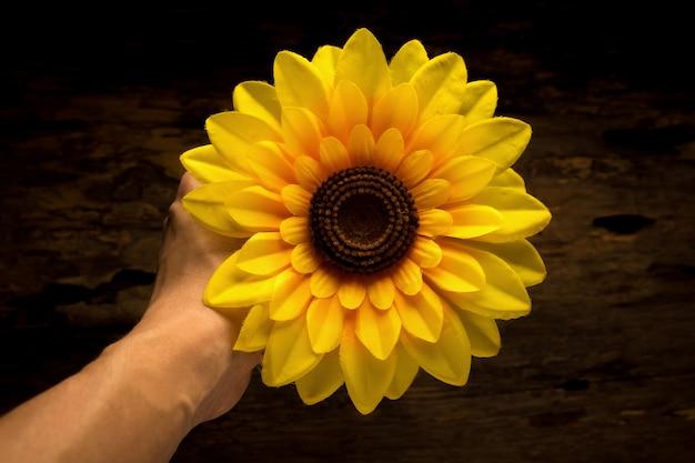 Hände, die gelbe sonnenblume anhalten.