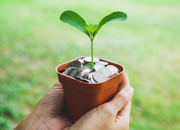 Hände, die geld im topf mit dem pflanzenwachsen halten