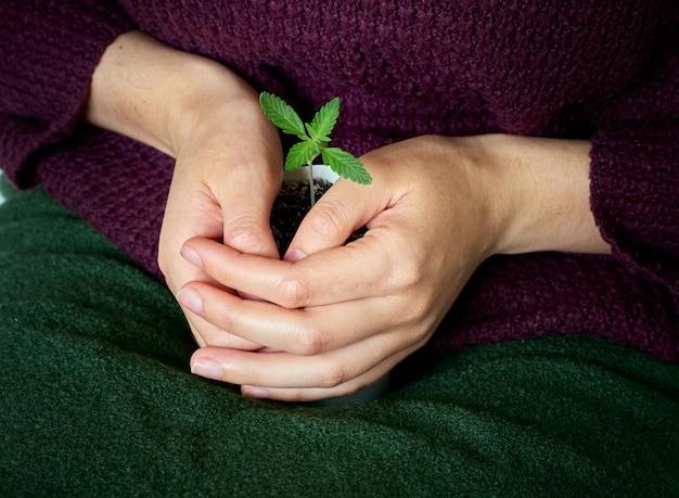 Hände, die junge grüne pflanze halten