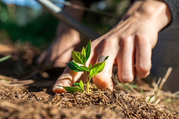 Hände, die junge grüne pflanze im garten mit sonnenlicht berühren