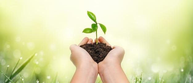 Hände, die junge grünpflanze auf grünem naturhintergrund halten rette die welt. umweltschutzkonzept.