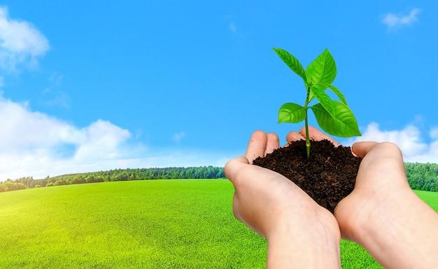 Hände, die junge grünpflanze auf naturlandschaftshintergrund mit grünem feld und blauem himmel halten. rette die welt. umweltschutzkonzept.