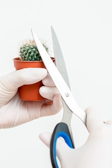 Hände, die kaktusdorn schneiden