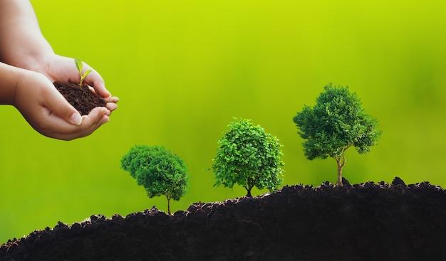 Hände, die kleinen baum halten, pflanzen. konzept der umweltverantwortung und weltumwelttag mit csr-konzept