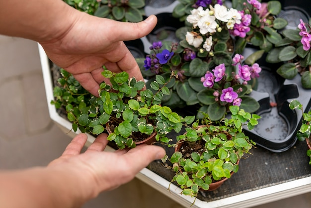 Hände, die sortiment von pflanzen zusammenstellen