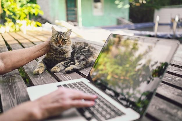 Hände einer älteren älteren frau, die eine flauschige straßenkatze streichelt und an einem laptop online draußen im sommergarten arbeitet. reflexionen von bäumen in einem computermonitor