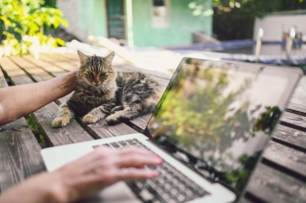 Hände einer älteren frau, die an einem laptop neben einer katze arbeitet