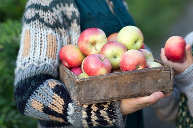 Hände halten einen korb mit roten äpfeln