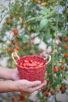 Hände halten einen korb mit tomaten