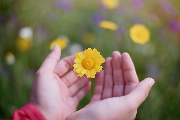 Hände halten gelbe blume auf dem land, soziale verantwortung der unternehmen, nachhaltiges ökologisches leben.