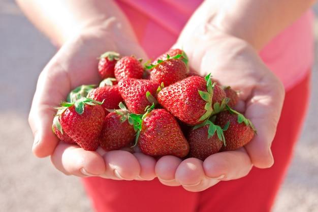 Hände halten haufen erdbeeren
